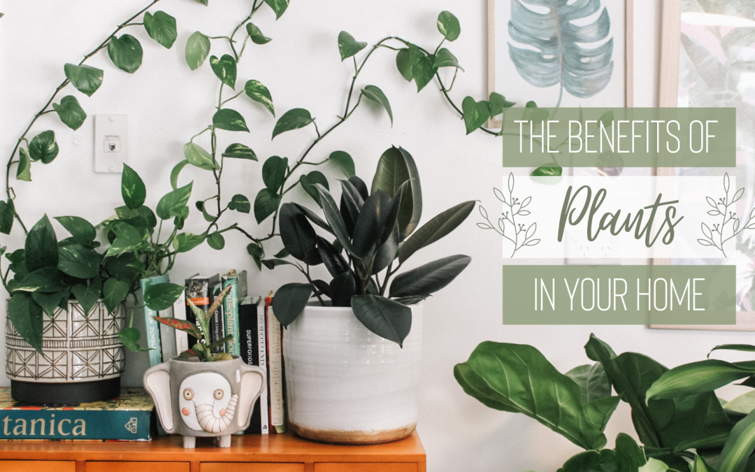 Breathe Life Into your Space!