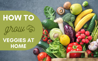 How to Grow Your Own Vegetables at Home!